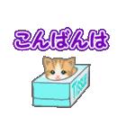 箱にゃんこ(個別スタンプ:3)