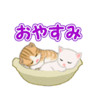 箱にゃんこ(個別スタンプ:4)