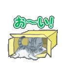 箱にゃんこ(個別スタンプ:5)