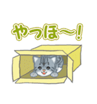 箱にゃんこ(個別スタンプ:6)