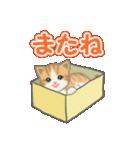 箱にゃんこ(個別スタンプ:8)