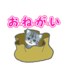 箱にゃんこ(個別スタンプ:16)