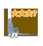 箱にゃんこ(個別スタンプ:17)