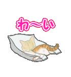 箱にゃんこ(個別スタンプ:26)