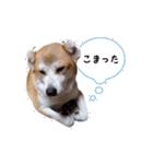 あまもっちゃん(個別スタンプ:10)