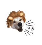 あまもっちゃん(個別スタンプ:11)