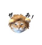 あまもっちゃん(個別スタンプ:12)