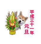 【期間限定】動く柴犬平成31年ご挨拶編(個別スタンプ:04)