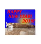 【期間限定】動く柴犬平成31年ご挨拶編(個別スタンプ:13)