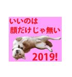 【期間限定】動く柴犬平成31年ご挨拶編(個別スタンプ:15)