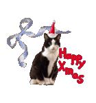 実写!はちわれ猫冬のイベントスタンプ(個別スタンプ:02)