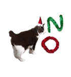 実写!はちわれ猫冬のイベントスタンプ(個別スタンプ:05)