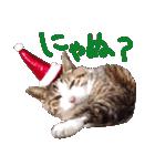 実写!はちわれ猫冬のイベントスタンプ(個別スタンプ:06)