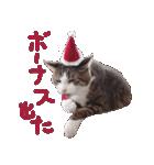 実写!はちわれ猫冬のイベントスタンプ(個別スタンプ:07)