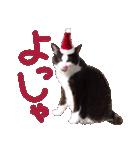 実写!はちわれ猫冬のイベントスタンプ(個別スタンプ:08)