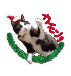 実写!はちわれ猫冬のイベントスタンプ(個別スタンプ:09)