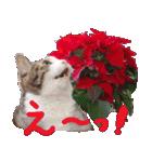 実写!はちわれ猫冬のイベントスタンプ(個別スタンプ:10)