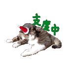 実写!はちわれ猫冬のイベントスタンプ(個別スタンプ:11)