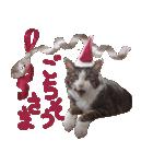実写!はちわれ猫冬のイベントスタンプ(個別スタンプ:14)