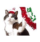 実写!はちわれ猫冬のイベントスタンプ(個別スタンプ:17)