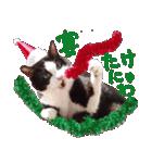 実写!はちわれ猫冬のイベントスタンプ(個別スタンプ:19)