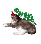 実写!はちわれ猫冬のイベントスタンプ(個別スタンプ:22)