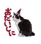 実写!はちわれ猫冬のイベントスタンプ(個別スタンプ:23)