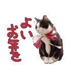 実写!はちわれ猫冬のイベントスタンプ(個別スタンプ:24)