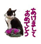 実写!はちわれ猫冬のイベントスタンプ(個別スタンプ:28)
