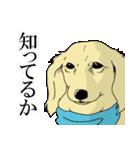 兄弟犬 公式スタンプ(個別スタンプ:01)