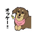 兄弟犬 公式スタンプ(個別スタンプ:13)