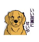 兄弟犬 公式スタンプ(個別スタンプ:30)