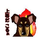 兄弟犬 公式スタンプ(個別スタンプ:40)