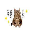 みるく と きなこ(個別スタンプ:03)
