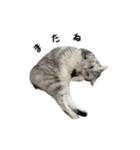みるく と きなこ(個別スタンプ:08)