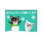 あけおめチワワ&黒猫・猪☆動く!(個別スタンプ:02)