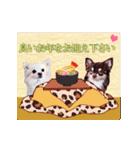 あけおめチワワ&黒猫・猪☆動く!(個別スタンプ:03)