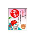 あけおめチワワ&黒猫・猪☆動く!(個別スタンプ:06)