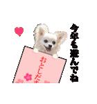 あけおめチワワ&黒猫・猪☆動く!(個別スタンプ:10)