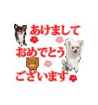 あけおめチワワ&黒猫・猪☆動く!(個別スタンプ:11)