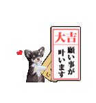 あけおめチワワ&黒猫・猪☆動く!(個別スタンプ:14)