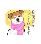 秋田犬の年末年始スタンプ(個別スタンプ:13)