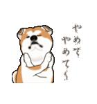 秋田犬の年末年始スタンプ(個別スタンプ:23)