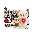 あみぐるみネコ達のお正月2019(個別スタンプ:01)
