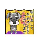 シュナウザー犬の年末年始スタンプ(個別スタンプ:1)