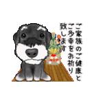 シュナウザー犬の年末年始スタンプ(個別スタンプ:6)