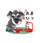 シュナウザー犬の年末年始スタンプ(個別スタンプ:7)