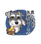 シュナウザー犬の年末年始スタンプ(個別スタンプ:10)