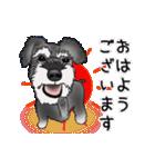 シュナウザー犬の年末年始スタンプ(個別スタンプ:17)
