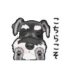 シュナウザー犬の年末年始スタンプ(個別スタンプ:21)